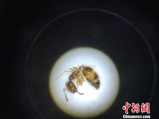 呼和浩特白塔国际机场截获上百只进境活蚂蚁