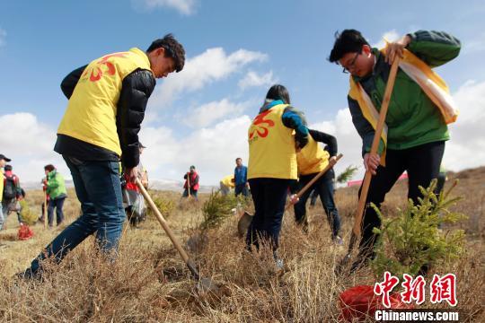 """""""蚂蚁森林""""项目在青海湟水规模化林场落地"""