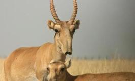 野生动物禁食范围将再明确 对电商监测力度加大