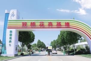 央视《第一时间》直播点赞郑州陈寨花卉双桥基地
